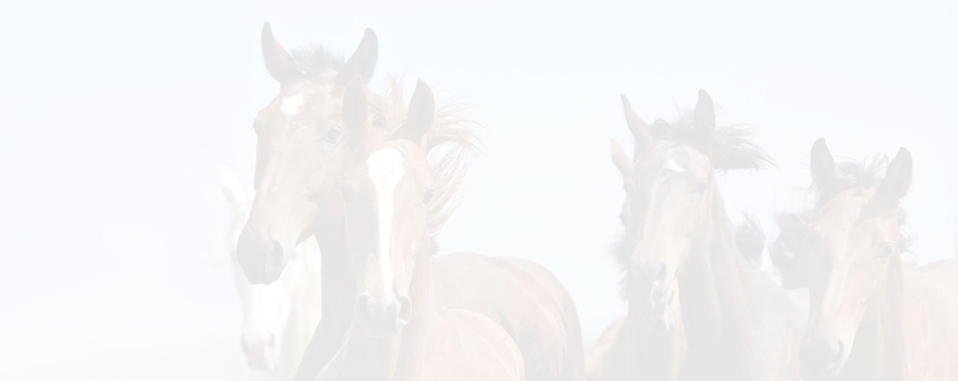 Hippoforme | Une alimentation de qualité pour vos chevaux